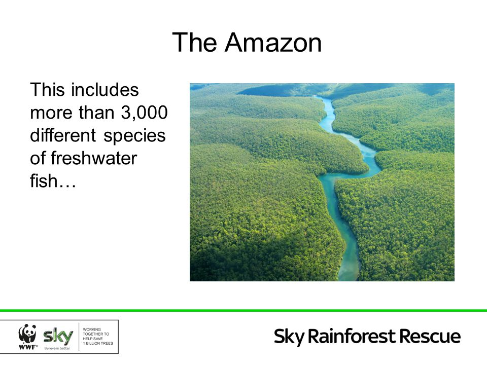 The Amazon This includes more than 3,000 different species of freshwater fish…