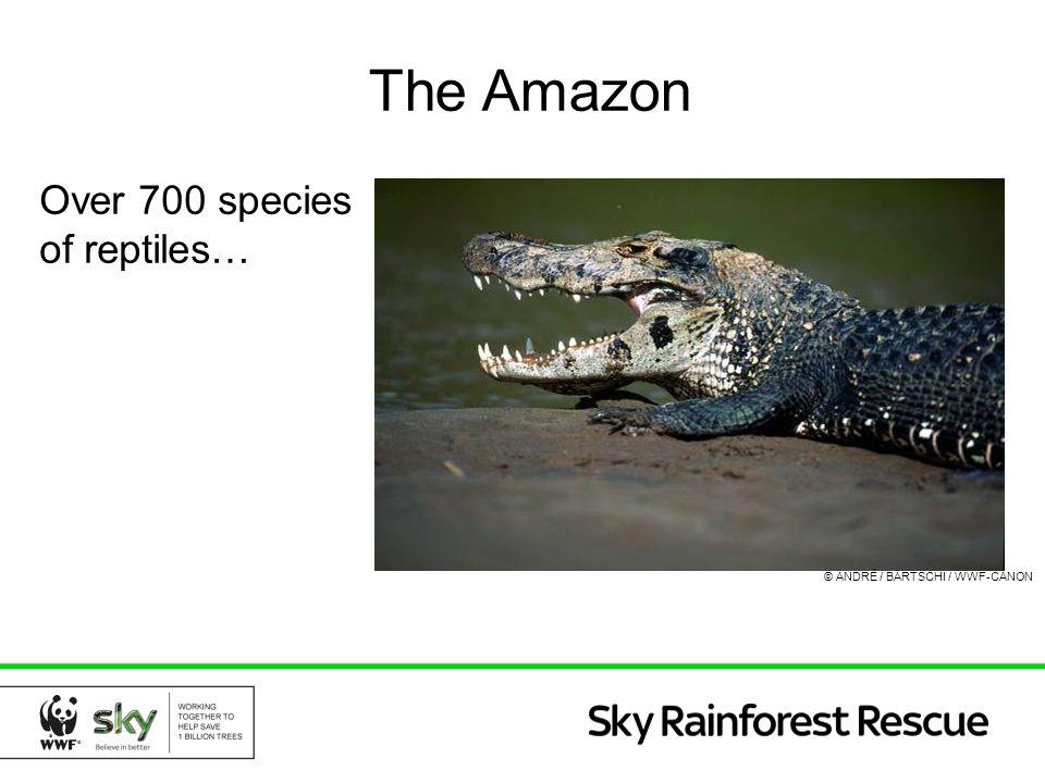 The Amazon Over 700 species of reptiles… © ANDRÉ / BÄRTSCHI / WWF-CANON