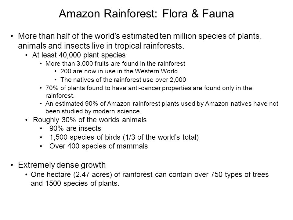 Amazon Rainforest: Flora & Fauna More than half of the world s estimated ten million species of plants, animals and insects live in tropical rainforests.