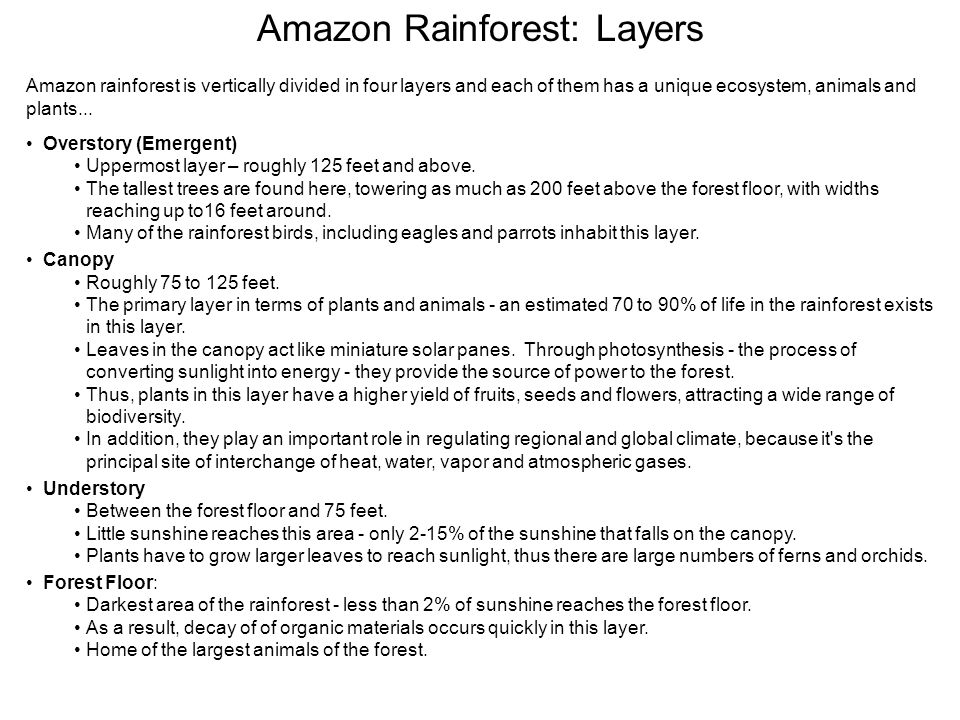 Amazon rainforest is vertically divided in four layers and each of them has a unique ecosystem, animals and plants...
