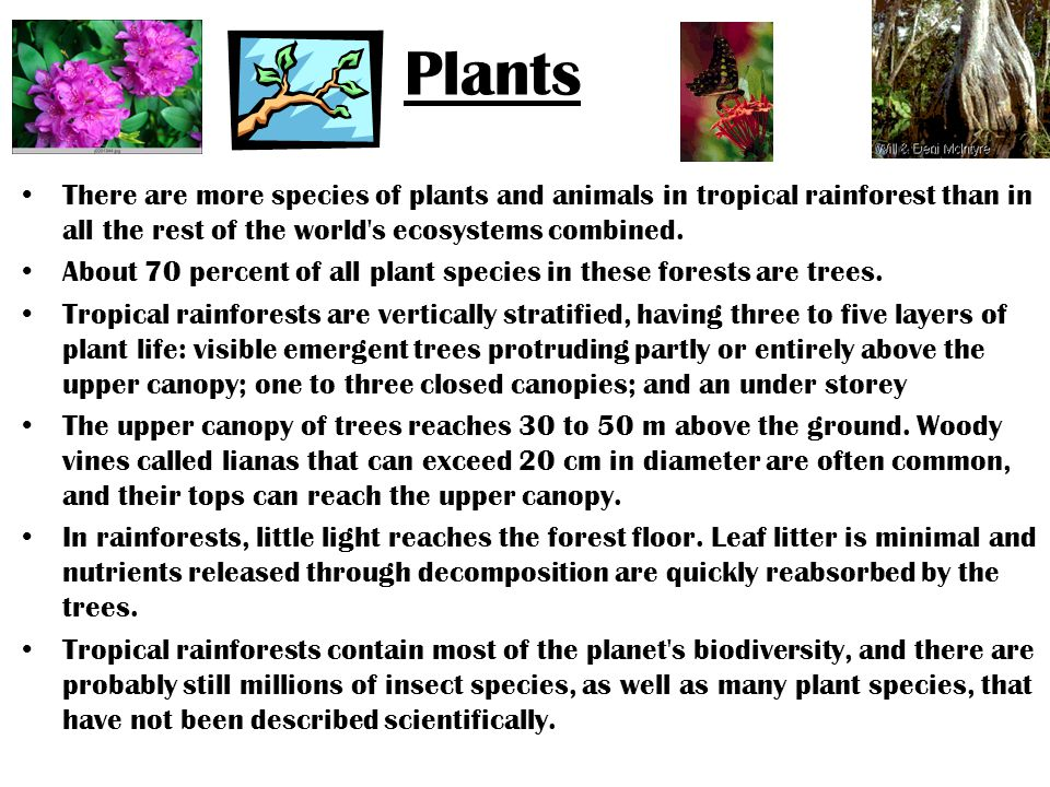 Plants There are more species of plants and animals in tropical rainforest than in all the rest of the world s ecosystems combined.