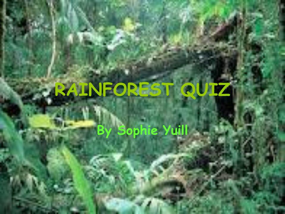 RAINFOREST QUIZ By Sophie Yuill