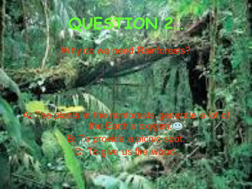 QUESTION 2… Why do we need Rainforests? A: The plants in the rainforests generate a lot of the Earth's oxygen. B: To provide a picnic spot. C: To give