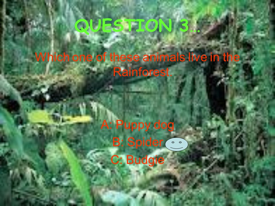QUESTION 3… Which one of these animals live in the Rainforest. A: Puppy dog B: Spider C: Budgie
