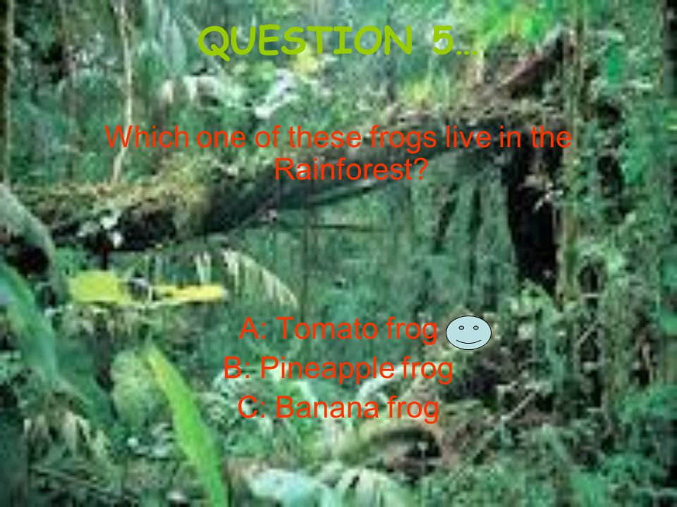 QUESTION 5… Which one of these frogs live in the Rainforest? A: Tomato frog B: Pineapple frog C: Banana frog