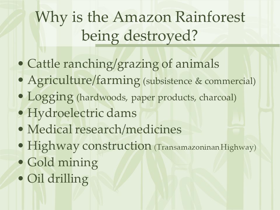 Why is the Amazon Rainforest being destroyed? Cattle ranching/grazing of animals Agriculture/farming (subsistence & commercial) Logging (hardwoods, pa