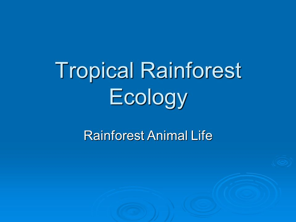Rainforest Amphibians: Frogs  Poison dart tree frogs