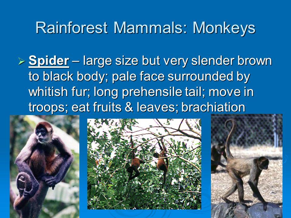 Rainforest Vertebrates: Birds  Chachalaca –  Guan –  Curassow -