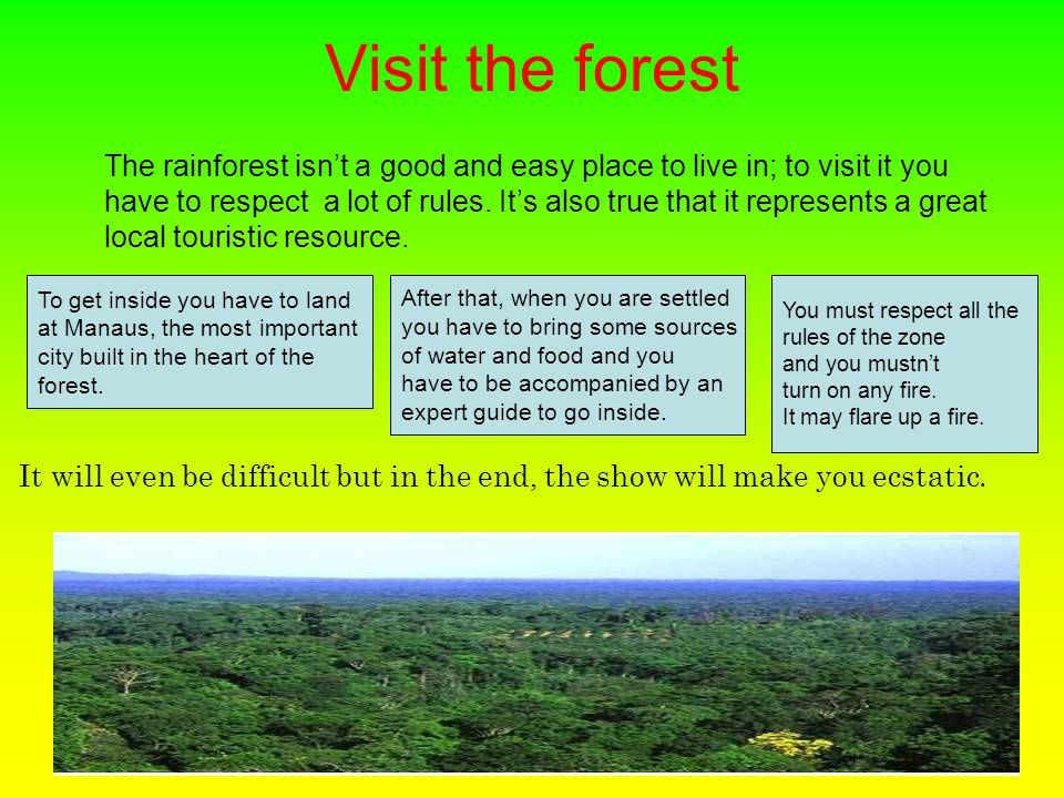 Visit the forest The rainforest isn't a good and easy place to live in; to visit it you have to respect a lot of rules.