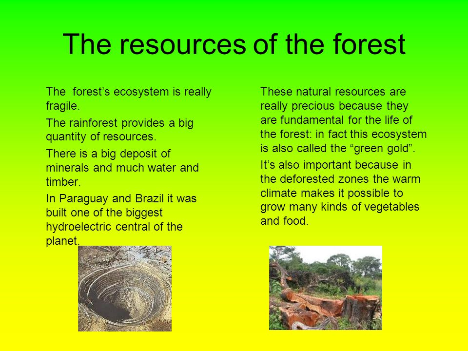 The resources of the forest The forest's ecosystem is really fragile.