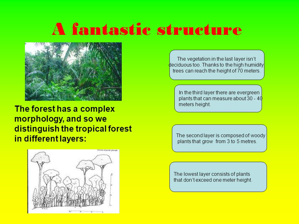 The wonders of the forest In the rainforest there is the biggest varieties of flora of the planet.
