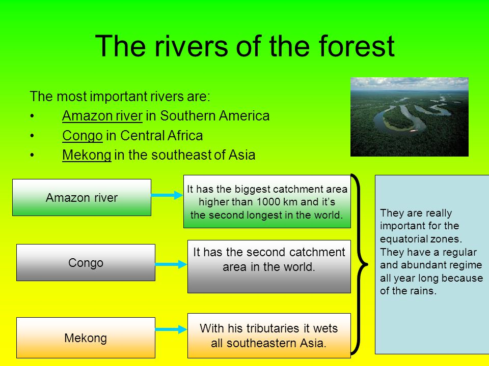 The rivers of the forest The most important rivers are: Amazon river in Southern America Congo in Central Africa Mekong in the southeast of Asia Amazon river It has the biggest catchment area higher than 1000 km and it's the second longest in the world.