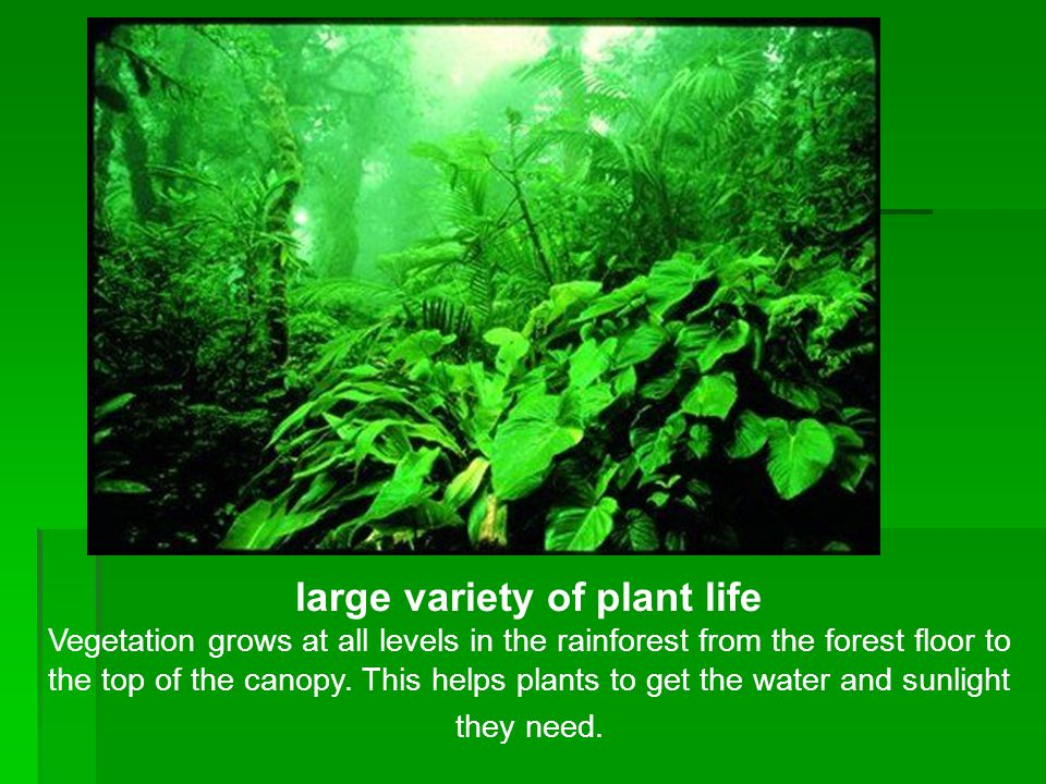 large variety of plant life Vegetation grows at all levels in the rainforest from the forest floor to the top of the canopy. This helps plants to get