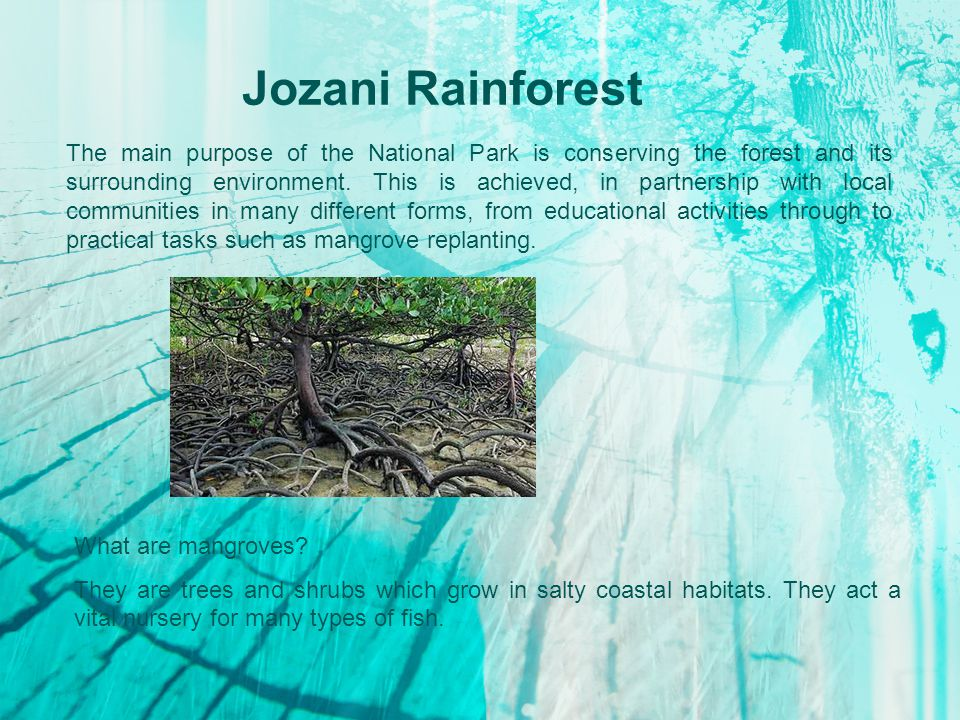 Jozani Rainforest The main purpose of the National Park is conserving the forest and its surrounding environment.