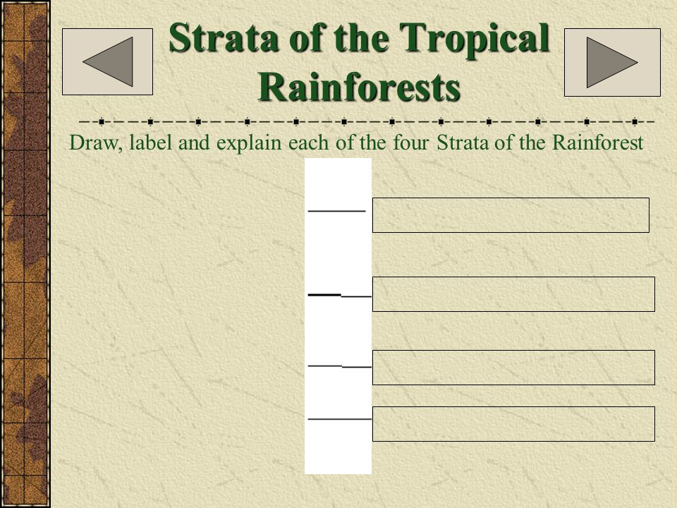People of the Tropical Rainforest Explain what their lives are like in the space below.