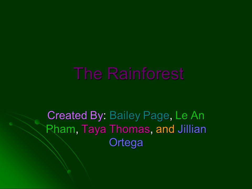 The Rainforest The Rainforest Created By: Bailey Page, Le An Pham, Taya Thomas, and Jillian Ortega