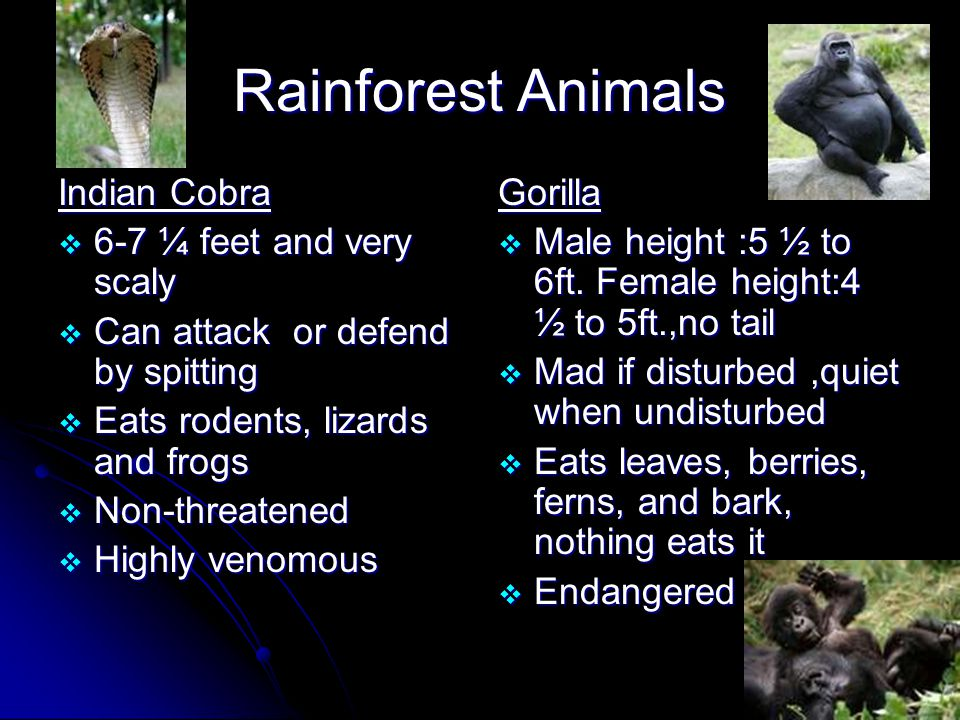 Rainforest Animals Flying Dragon  7 ½ to 8 ½ inches  Buries 1 to 4 eggs in soil  Eats ants and termites, nothing eats it  Non-Threatened  Has flaps for gliding from tree to tree Capybara  3 ½ to 4 ¼ feet  When swimming, only, it's eyes, ears, and nostrils show above the water  Eats plants, on land and in water, nothing eats it  Non-Threatened  The largest rodent in the world