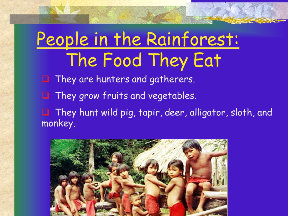 People in the Rainforest: The Food They Eat  They are hunters and gatherers.