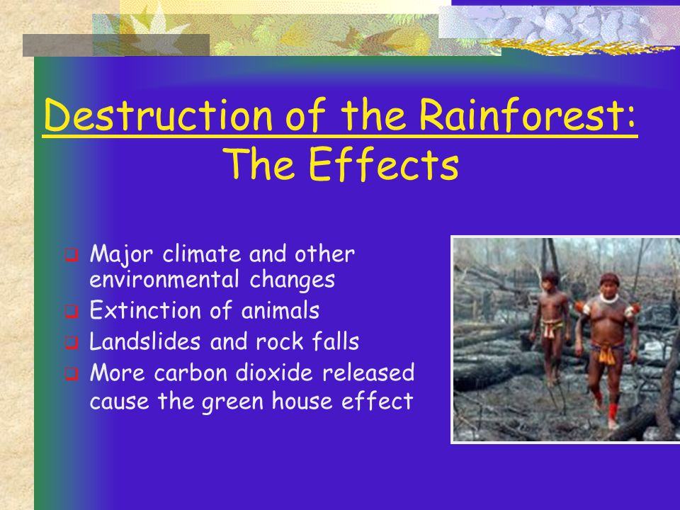 Destruction of the Rainforest: The Effects  Major climate and other environmental changes  Extinction of animals  Landslides and rock falls  More carbon dioxide released cause the green house effect