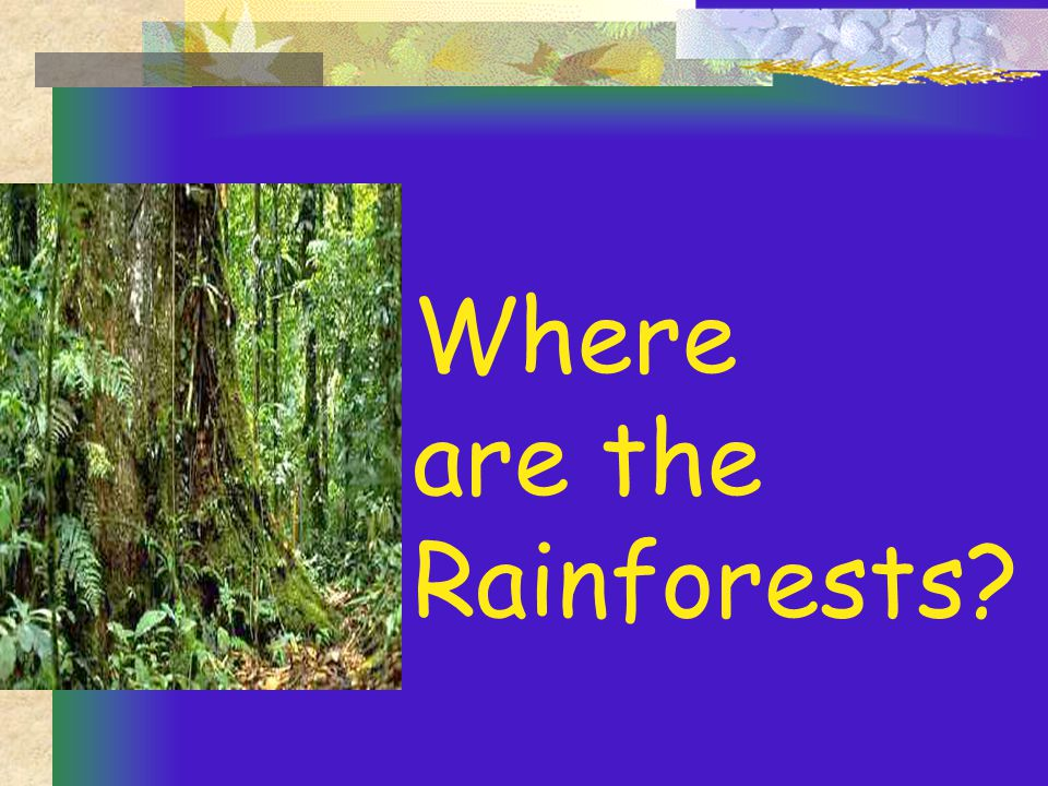 Where are the Rainforests