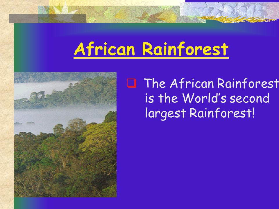 Southern Asia  The Southern Asia Rainforest is home to the world's largest Mangrove forest!