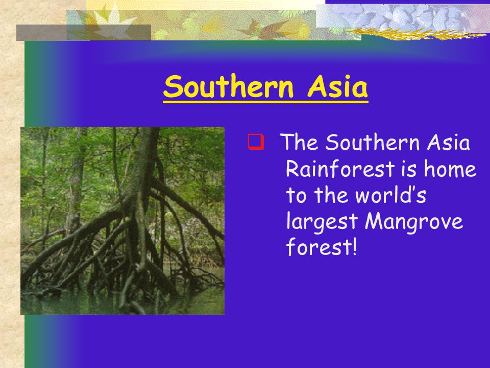 Southern Asia  The Southern Asia Rainforest is home to the world's largest Mangrove forest!