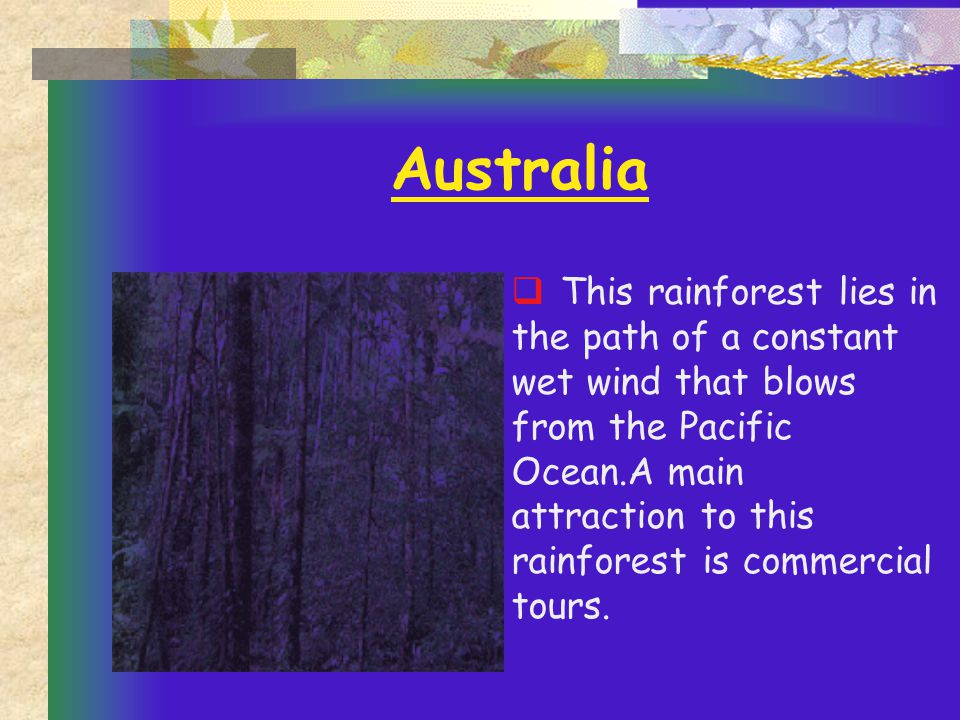 Australia  This rainforest lies in the path of a constant wet wind that blows from the Pacific Ocean.A main attraction to this rainforest is commercial tours.