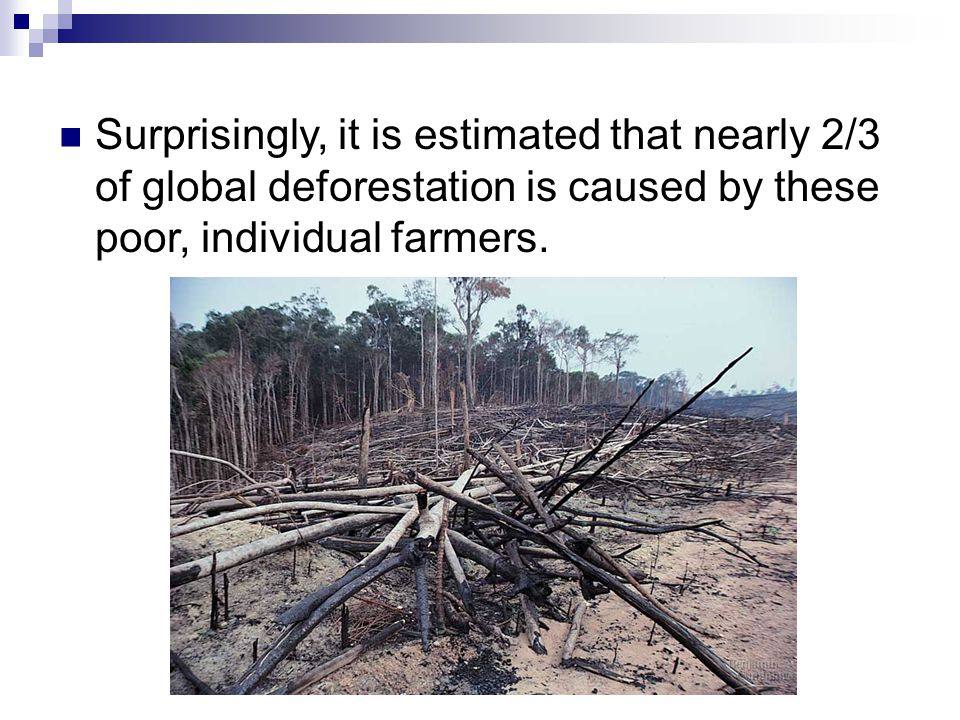 Surprisingly, it is estimated that nearly 2/3 of global deforestation is caused by these poor, individual farmers.