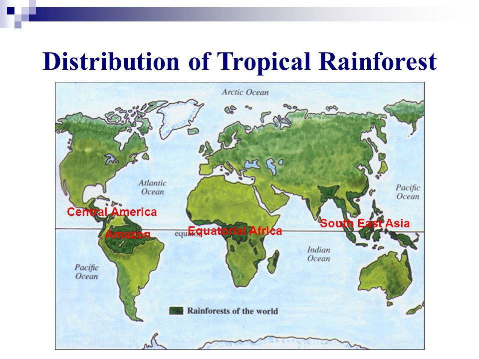 Distribution of Tropical Rainforest Amazon Equatorial Africa Central America South East Asia