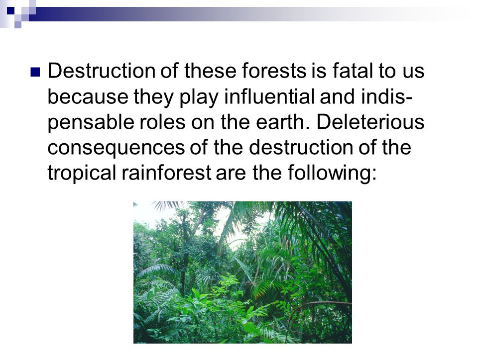 Part III Possible Solution for Deforestation