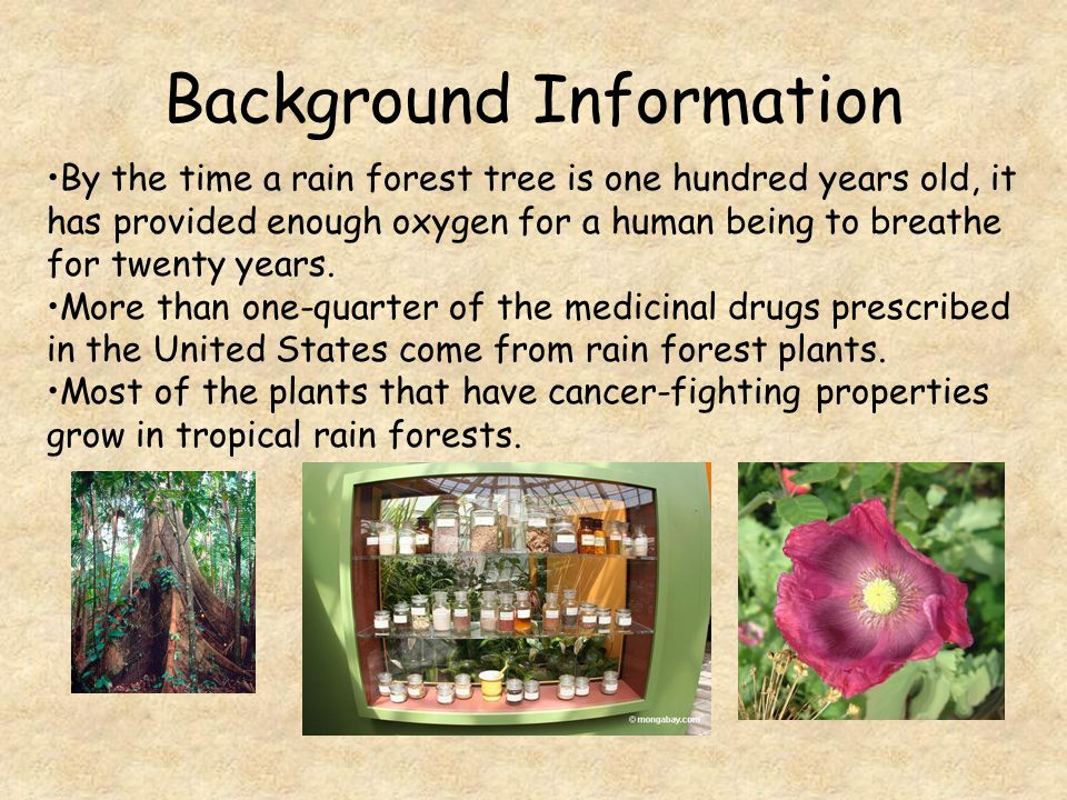 Background Information Though tropical rain forests cover only a small part of the earth, half the world's plants and animal species are found within them.