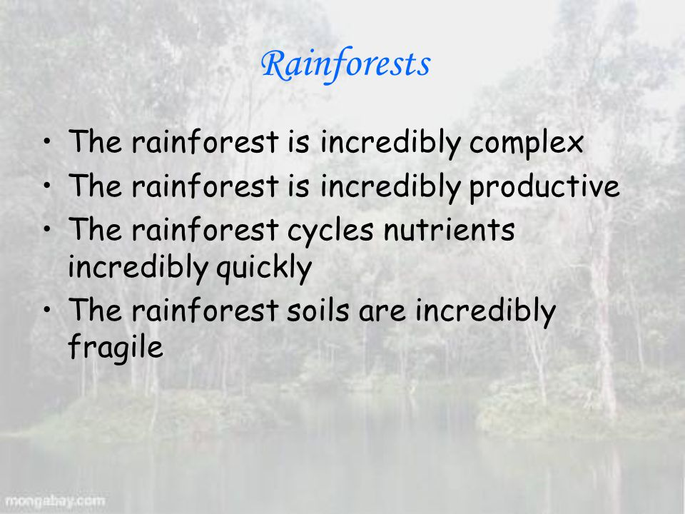 Rainforests The rainforest is incredibly complex The rainforest is incredibly productive The rainforest cycles nutrients incredibly quickly The rainforest soils are incredibly fragile