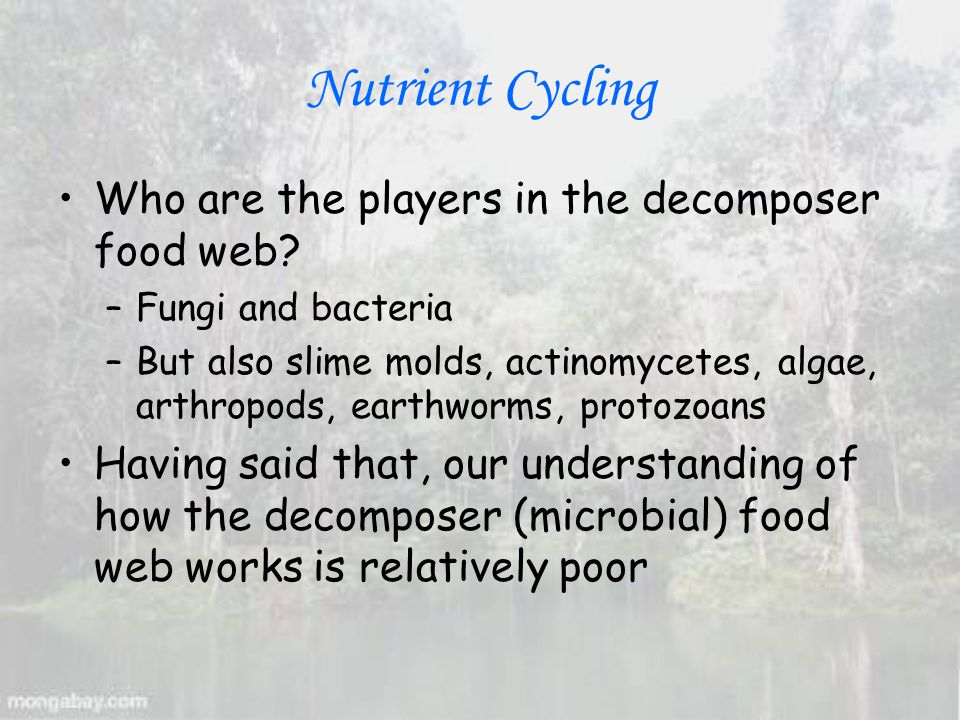 Nutrient Cycling Who are the players in the decomposer food web.