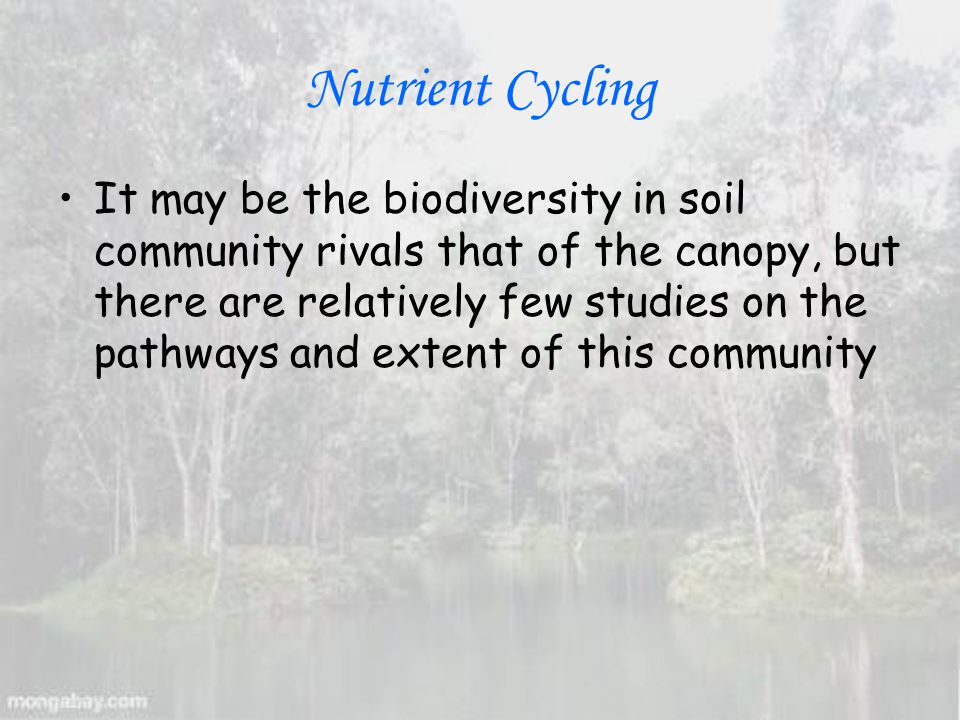 Nutrient Cycling It may be the biodiversity in soil community rivals that of the canopy, but there are relatively few studies on the pathways and extent of this community