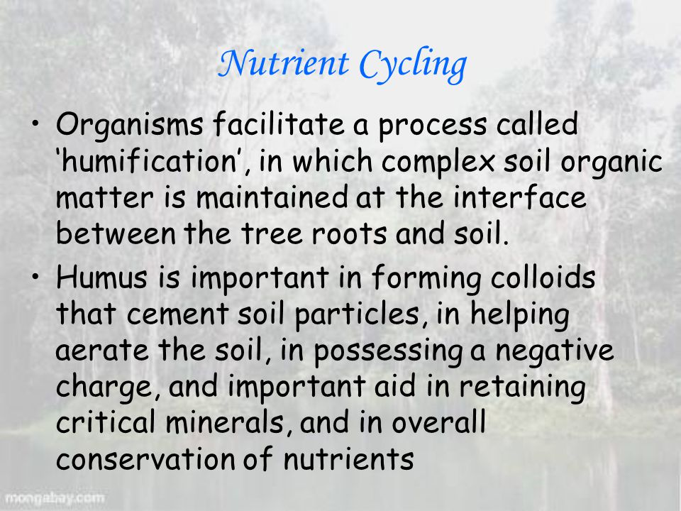 Nutrient Cycling Organisms facilitate a process called 'humification', in which complex soil organic matter is maintained at the interface between the tree roots and soil.