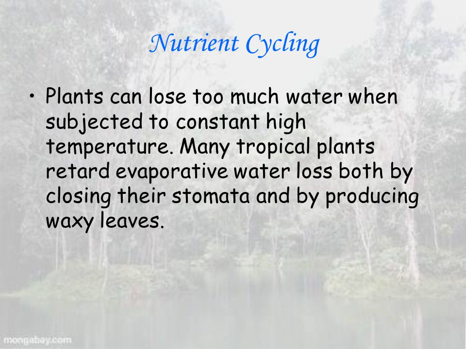 Nutrient Cycling Plants can lose too much water when subjected to constant high temperature.