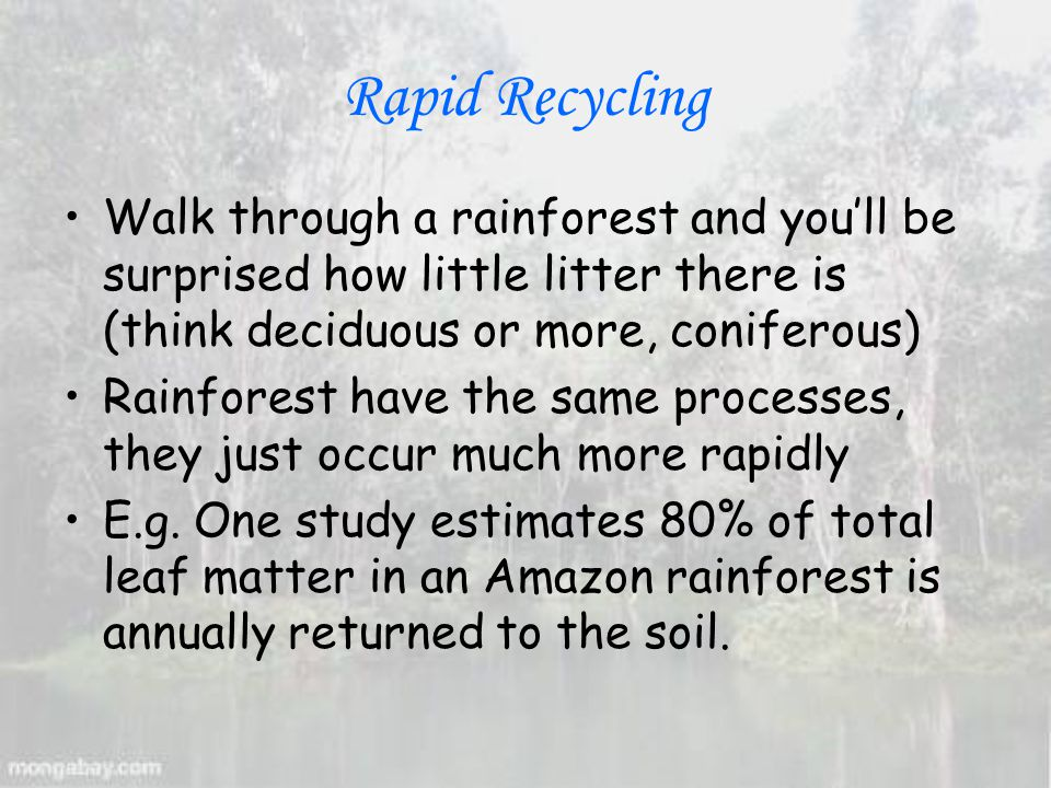 Rapid Recycling Walk through a rainforest and you'll be surprised how little litter there is (think deciduous or more, coniferous) Rainforest have the same processes, they just occur much more rapidly E.g.
