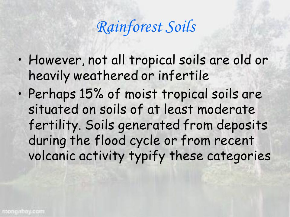 Rainforest Soils However, not all tropical soils are old or heavily weathered or infertile Perhaps 15% of moist tropical soils are situated on soils of at least moderate fertility.