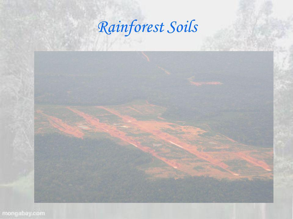 Rainforest Soils