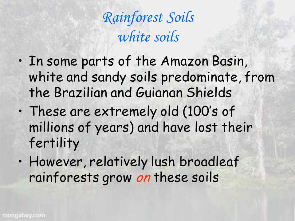 Rainforest Soils white soils In some parts of the Amazon Basin, white and sandy soils predominate, from the Brazilian and Guianan Shields These are extremely old (100's of millions of years) and have lost their fertility However, relatively lush broadleaf rainforests grow on these soils