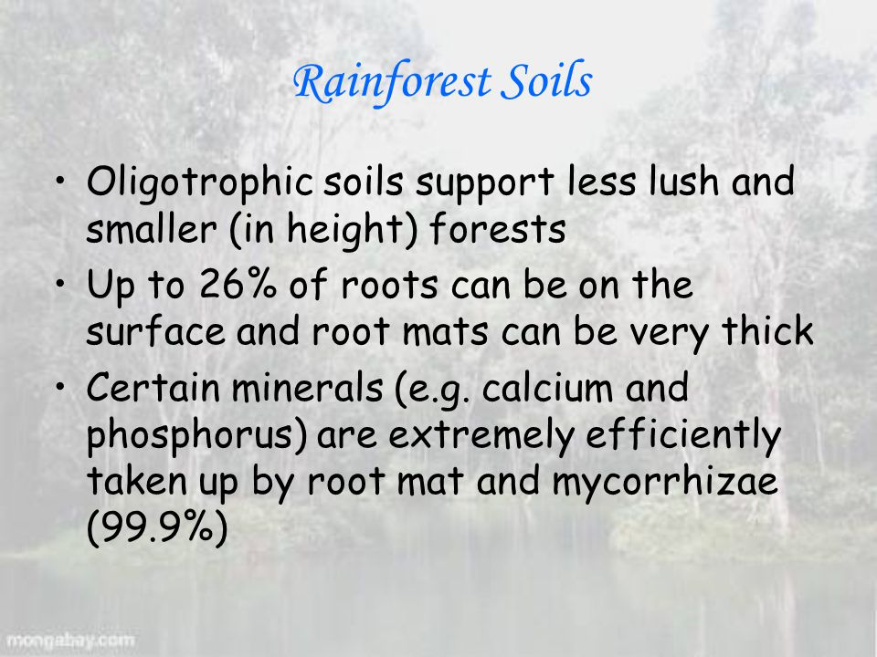 Rainforest Soils Oligotrophic soils support less lush and smaller (in height) forests Up to 26% of roots can be on the surface and root mats can be very thick Certain minerals (e.g.