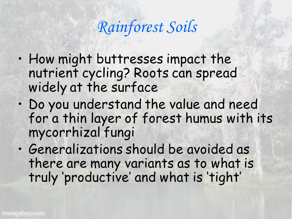 Rainforest Soils How might buttresses impact the nutrient cycling.