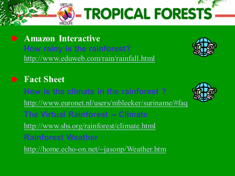 Fact Sheet How is the climate in the rainforest .