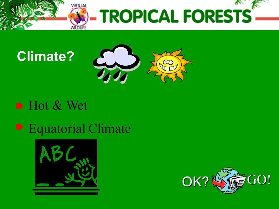 Hot & Wet Climate? Equatorial Climate OK? GO!