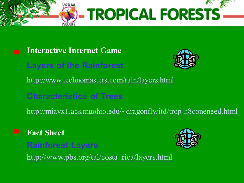 Interactive Internet Game Layers of the Rainforest http://www.technomasters.com/rain/layers.html Characteristics of Trees http://miavx1.acs.muohio.edu/~dragonfly/itd/trop-h8coneneed.html http://www.technomasters.com/rain/layers.html http://miavx1.acs.muohio.edu/~dragonfly/itd/trop-h8coneneed.html Fact Sheet Rainforest Layers http://www.pbs.org/tal/costa_rica/layers.html
