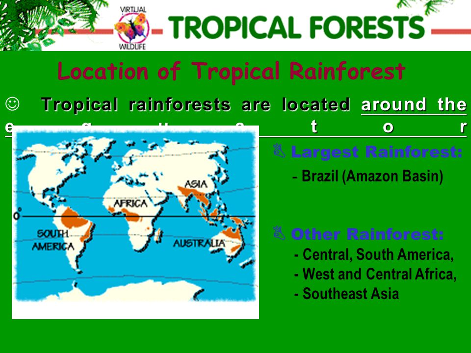 Tropical rainforests are located around the equator  Largest Rainforest: - Brazil (Amazon Basin) Location of Tropical Rainforest  Other Rainforest: - Central, South America, - West and Central Africa, - Southeast Asia
