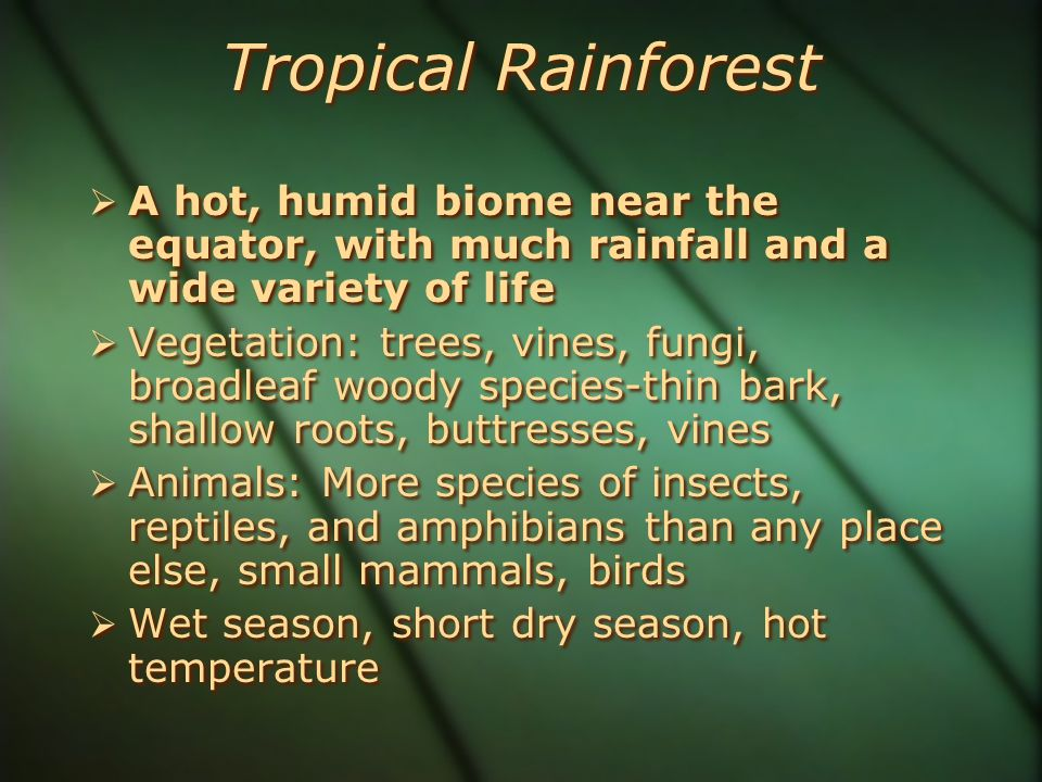  A hot, humid biome near the equator, with much rainfall and a wide variety of life  Vegetation: trees, vines, fungi, broadleaf woody species-thin bark, shallow roots, buttresses, vines  Animals: More species of insects, reptiles, and amphibians than any place else, small mammals, birds  Wet season, short dry season, hot temperature  A hot, humid biome near the equator, with much rainfall and a wide variety of life  Vegetation: trees, vines, fungi, broadleaf woody species-thin bark, shallow roots, buttresses, vines  Animals: More species of insects, reptiles, and amphibians than any place else, small mammals, birds  Wet season, short dry season, hot temperature