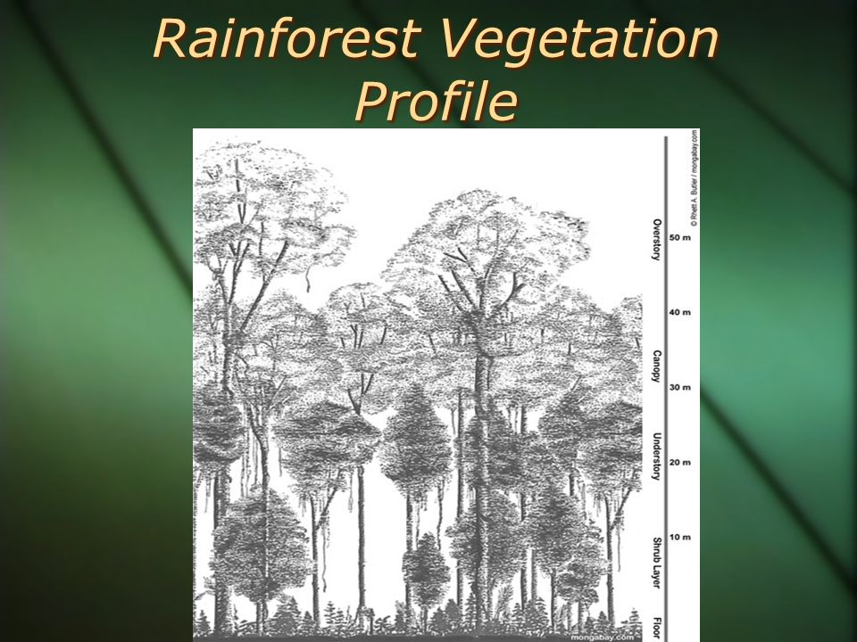 Rainforest Vegetation Profile