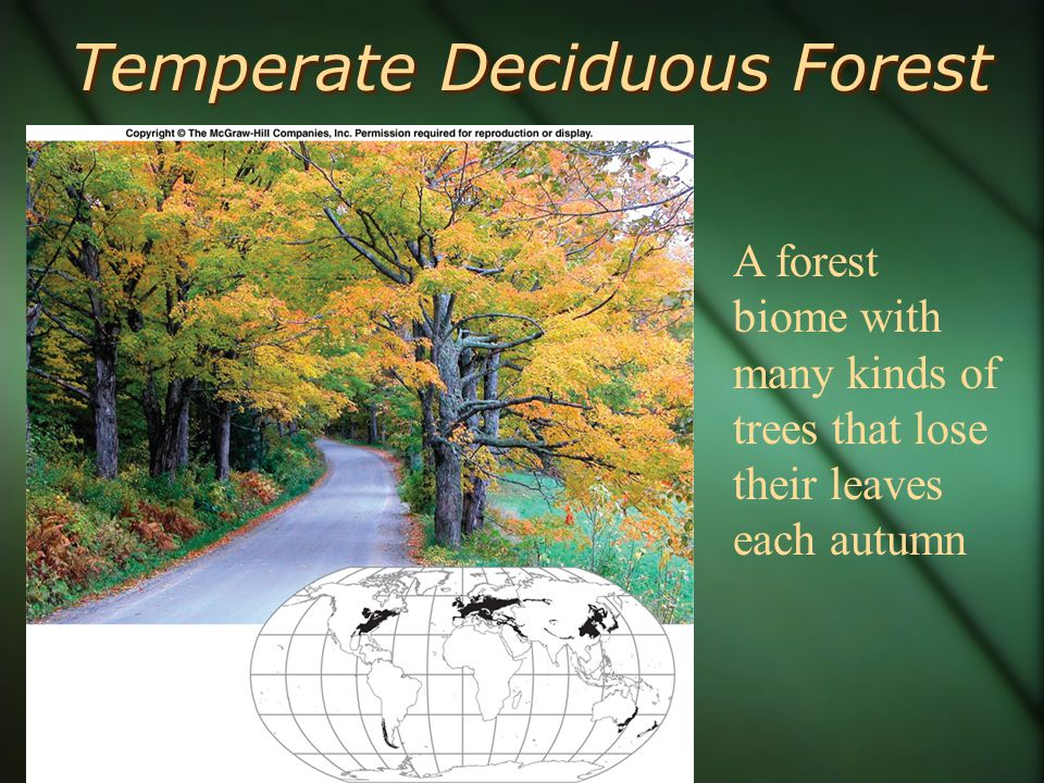 Temperate Deciduous Forest A forest biome with many kinds of trees that lose their leaves each autumn