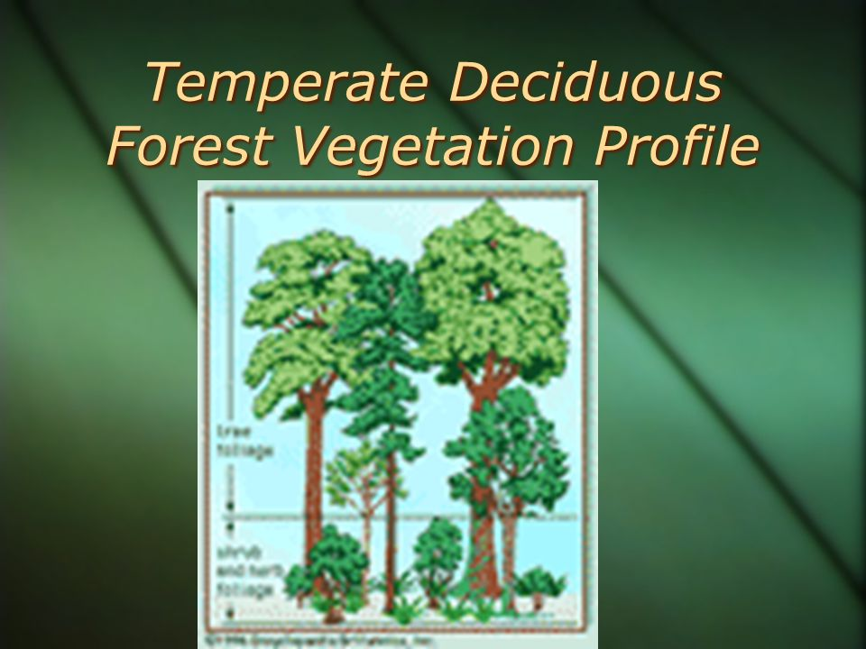 Temperate Deciduous Forest Vegetation Profile